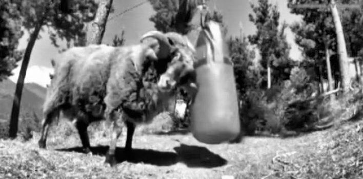 Perché un fighter si blocca sul ring anche se ben preparato fisicamente?